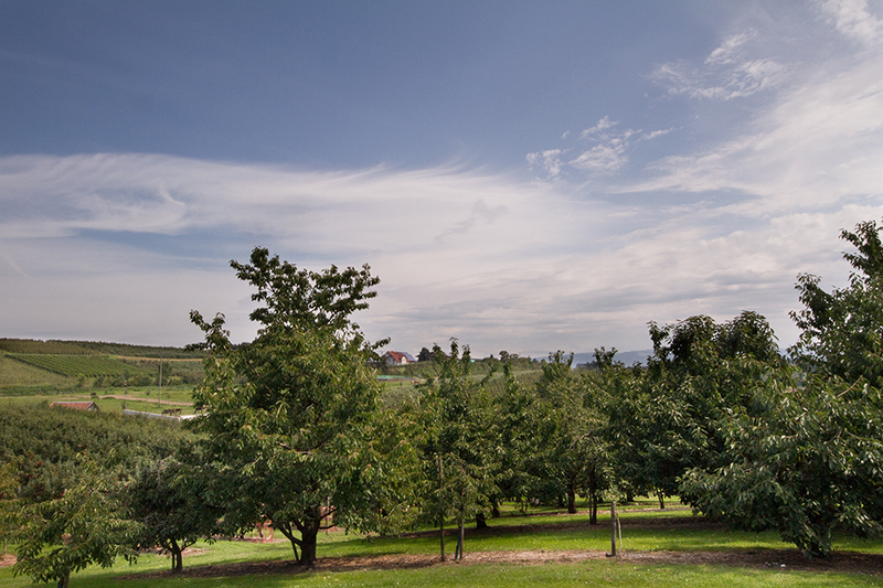 Hinterland-Blick-Pferde