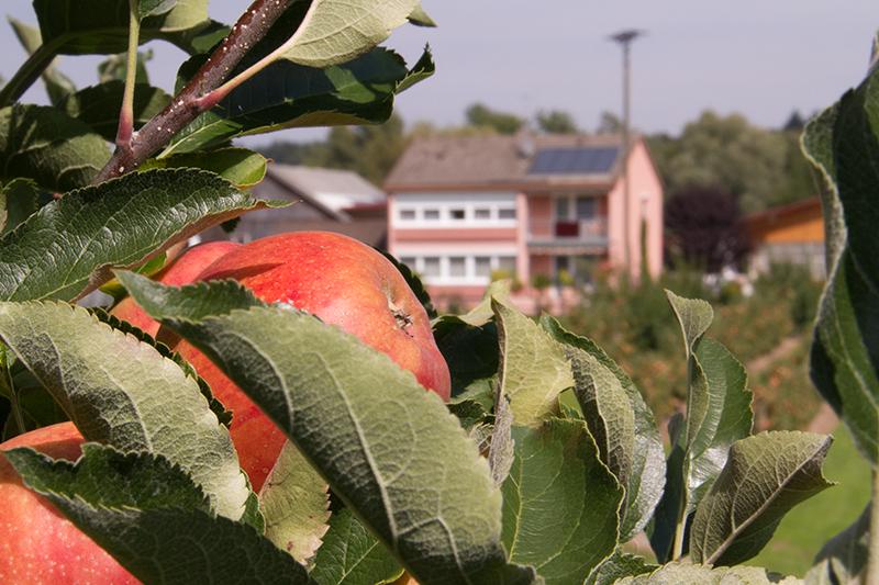 Apfel-und-Ferienwohnung